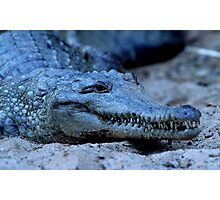 Freshwater Crocodile Photographic Print