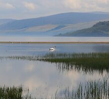 The Calm Waters of Loch Tay by Paul Bettison
