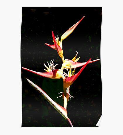Bird Of Thai Paradise Poster