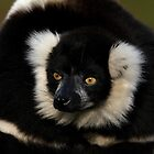 Lemur by Mark Hughes