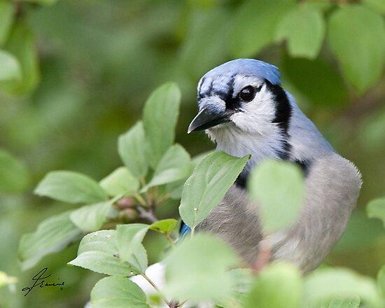 Peek Of Blue, I See U by DigitallyStill