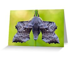 Laothoe populi Greeting Card