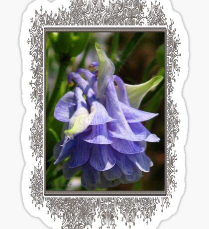 Double Columbine named Blue Sticker