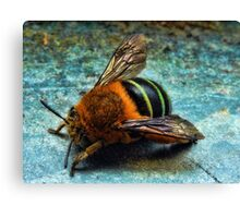 """""""Bumble Bee"""" Canvas Print"""