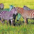Zebra Rainbow by jsalozzo