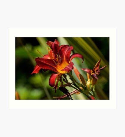 Hemerocallis 'Red Precious' Art Print