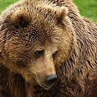 European Brown Bear by Mark Hughes