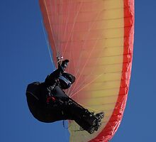 Soaring on a Flexed Wing by Sheri Bawtinheimer