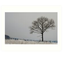 A  Lonely Tree Art Print