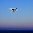 etherial gull by SarahTrangmar