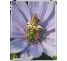 Green Metalic Bee and A Wee Friend on Chickory Flower iPad Case/Skin