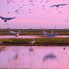 Landing of the Sand Cranes by the57man