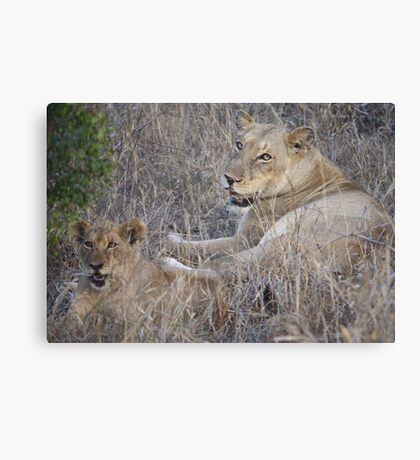 A Mothers Watch:- Lioness and her cub Canvas Print