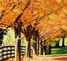 Fall Foliage by JMcCombie