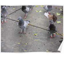Birds on city sidewalk Poster
