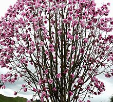 Magnolia by Margaret  Hyde