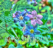 Happy Belated Birthday to Annabella by vigor