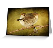 Baby Fairy Wrens #2 Greeting Card