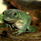 Freddie...The Green Tree Frog by Rosemaree