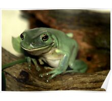 Freddie...The Green Tree Frog Poster