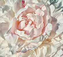 Pink Peony by Vickie Emms