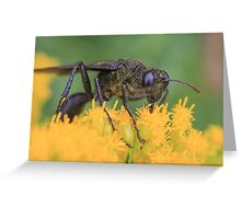 Wasp and Pollen Greeting Card