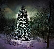 In the glow of the evergreen by Judi Taylor