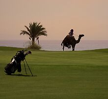Camel on hole 17 by TabaGolf