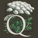 Q is for Queen Anne's Lace -- full image  by Stephanie Smith