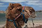 Yes, Virginia...There Are Camels On the Beach by Wendi Donaldson Laird