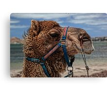 Yes, Virginia...There Are Camels On the Beach Canvas Print
