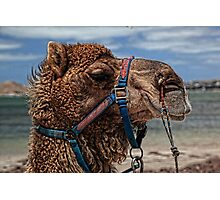 Yes, Virginia...There Are Camels On the Beach Photographic Print