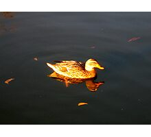 Golden Reflection Photographic Print
