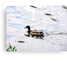 Duck on the Water Canvas Print
