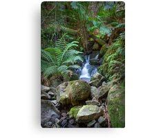 Sherbrooke Creek, Dandenong National Park Canvas Print