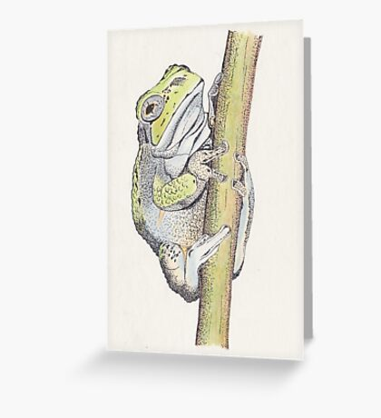 Tree frog drawn for Papa, #2  Greeting Card
