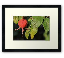 Berry and Veins Framed Print
