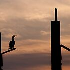 Waiting - Cormorant at sunrise by NicoleBPhotos