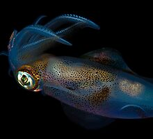 Southern Calamari Squid by MattTworkowski