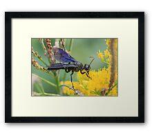 Black Wasp Framed Print