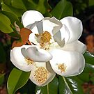 Magnolia No 4 by eruthart