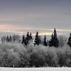 Winter sunrise in frost day  by Antanas