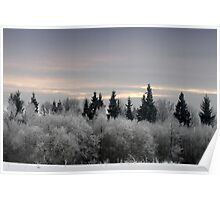 Winter sunrise in frost day  Poster