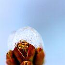 Budding beauty by LadyFi