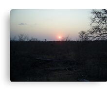Safari Sunset, Limpopo, South Africa Canvas Print