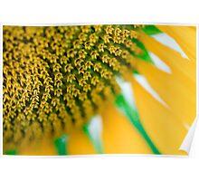 Front Garden Sunflower Macro Poster