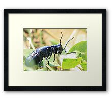 Black Insect Framed Print