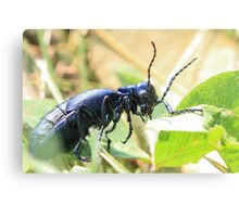 Black Insect Canvas Print