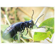 Black Insect Poster