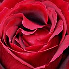 RED RED ROSE by AnnDixon